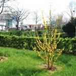 Jardins_MB_02